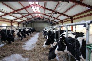 ВАнивском арйоне создается новое животноводческое предприятие