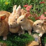 В Чукотском Анадыре будут выращивать кроликов