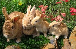 На Чукотке начнут выращивать кроликов