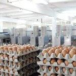 На Чукотке появится новая птицефабрика