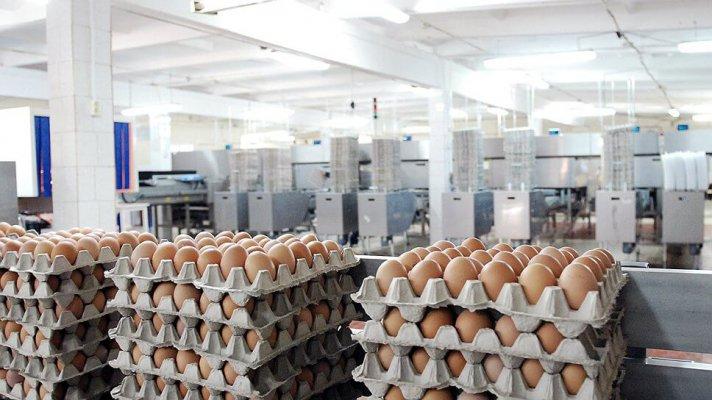 В Певеке появится первая птицефабрика