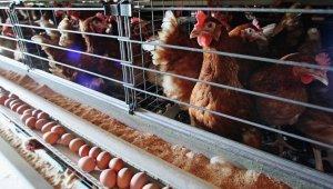 Крым обеспечивает себя мясом птицы и яйцом