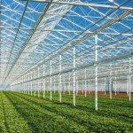 В Приморском крае появится новый тепличный комплекс