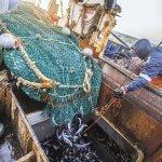 «Русская рыбопромышленная компания» намерена инвестировать в рыбоперерабатывающую промышленность Приморского края