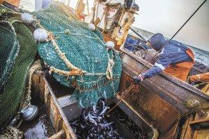 В Приморье появится новый рыбоперерабатывающий завод