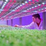Ученые Тимирязевской академии изучают влияние светодиодов на растения