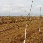 В Челябинской области заложили большой фруктовый сад