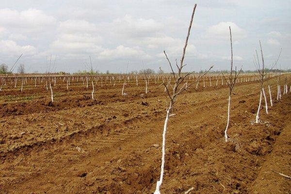 В Челябинской области заложили фруктовый сад промышленного типа