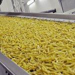 В Тюменской области строится завод по глубокой переработке картофеля