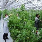 В Республике Коми строится крупный тепличный комплекс