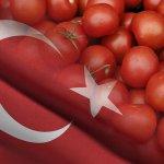 Турецкие помидоры появятся после 1 мая