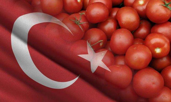 Турецкие томаты снова появятся на прилавках российских магазинов