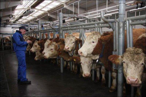 В НИжегородской области активно строятся фермы КРС