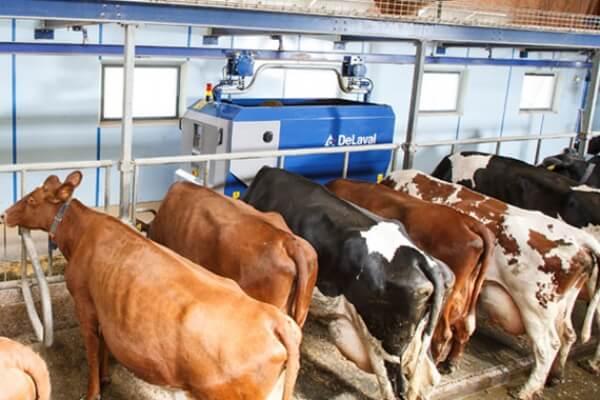 Грантовая поддержка помогла фермеру расширить молочное стадо