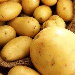 Египетская картошка снова появится на российском рынке