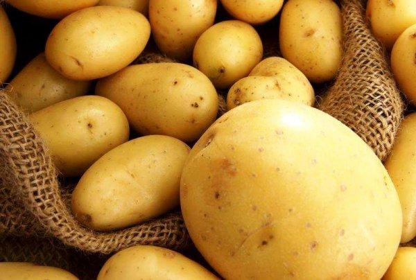 Египетскому картофелю открыли дорогу на российский рынок