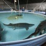 Рыбохозяйственный технопарк может появиться в Астраханской области