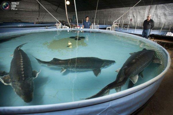 В Астраханской области планируют создать рыбохозяйственный технопарк