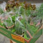 В республике Адыгея создают овощеводческий комплекс