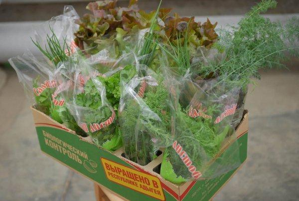 В Адыгеи создается агрокомплекс по выращиванию овощей