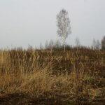 Проект «дальневосточного гектара» переносят на вологодскую землю