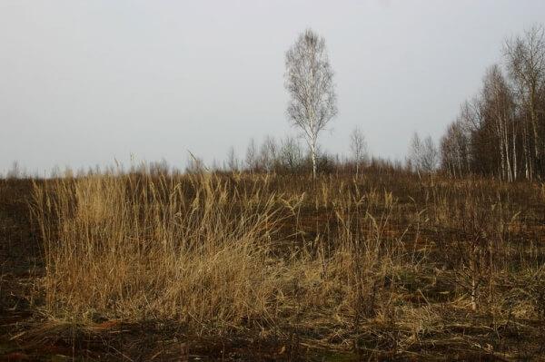 ВВолгодской области пуьующие земли отдают бесплатно всем желающим