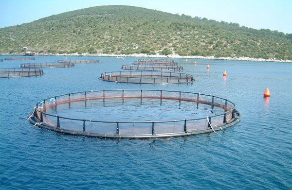 В КАрели начали обюучать фермеров рыбоводческой профессии