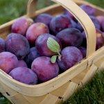 В Астрахани на зарубежных саженцах персика обнаружено опасное заболевание