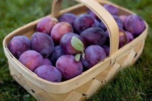 В астрахани на импортных саженцах персика нашли вирус шарки