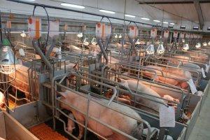 В Кемеровской области остановили строительство свинокомплекса