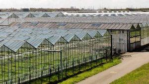 В поселке Беринговский строится тепличный комплекс
