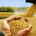 В Западной Сибири появится зерноперерабатывающий комплекс