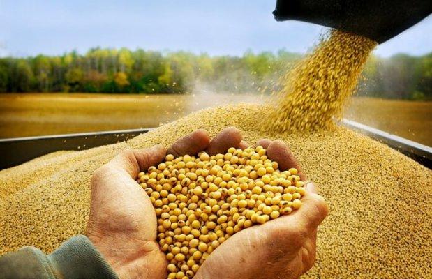 В Новосибирской области строится крупный зерноперерабатывающий комплекс
