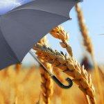 Будет ли агрострахование и дальше  входить в единую субсидию