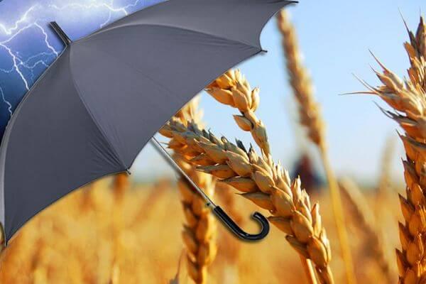 Агрострахование могут вывести из системы единой субсидии