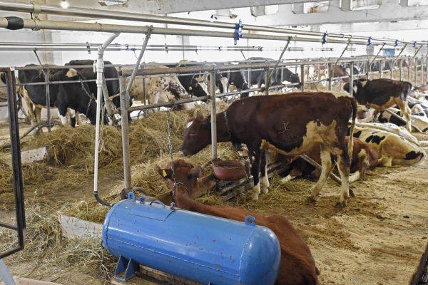 Опыт фермермкой деревни в Армизонском районе необходимо перенимать и другим сельхозпроизводителям региона