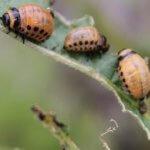В Крыму создали безопасные инсектициды от насекомых вредителей