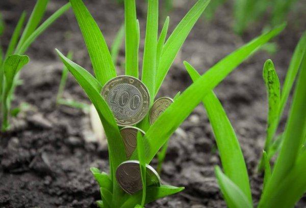 Псковские аграрии не смогут плаить полную ставку имущественного налога