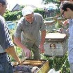 В Курской области  массово гибнут пчелы