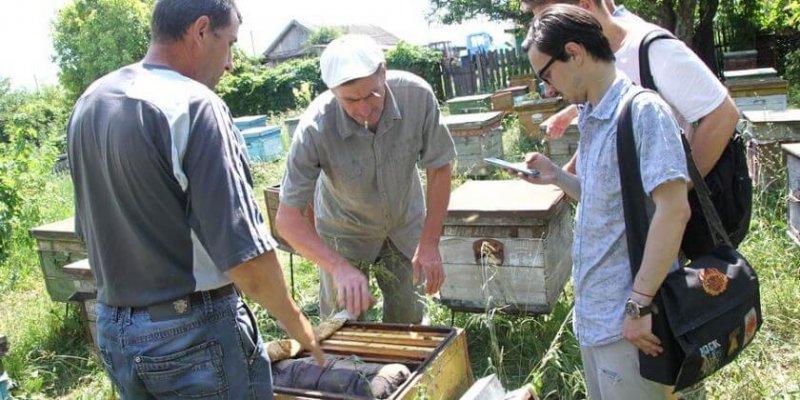 пчелы в Курской области гибнут о пестицидов