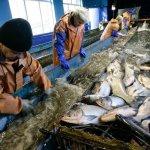 На Чукотке планируется создание  предприятий по переработке мяса и рыбы