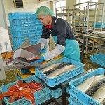 На Камчатке ввели в эксплуатацию  завод по переработке  рыбы