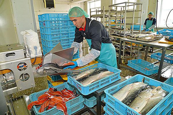 Камчатский край пополнился еще одним рыбозаводом