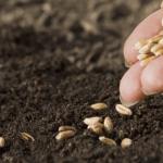 В Воронежской области строится семеноводческий завод
