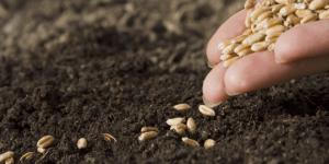 В Воронежской области строится семеноводческий центр