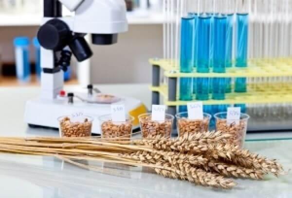 В Липецкой области начинают работу два семеноводческих предприятия