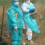 В Республике Тыва  выявлена сибирская язва
