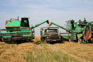 Омские аграрии убирают зерновые с использованием специальных методик
