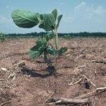 В Крыму выводят засухоустойчивые сорта сельскохозяйственных культур