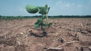 Крымские ученые создают новые сорта растений устойчивых к засухе